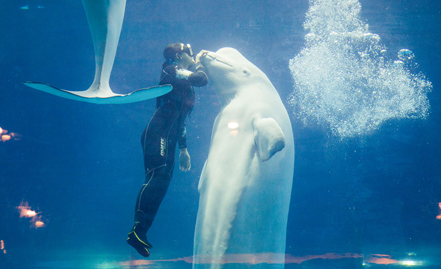 【蓝色秘境】广州正佳极地海洋世界门票
