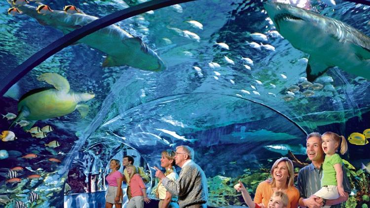 远古海底最大的生物