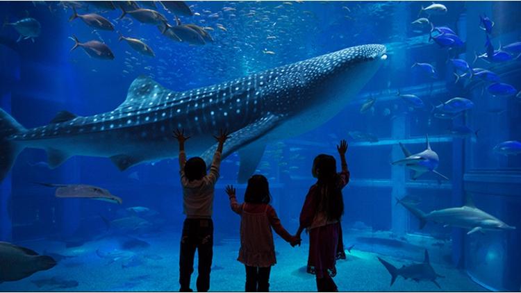 壁纸 动物 海底 海底世界 海洋馆 水族馆 鱼 鱼类 750_422