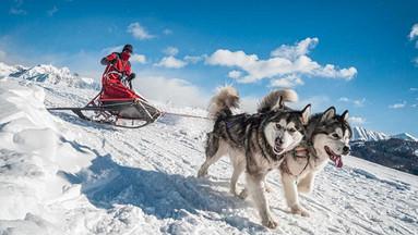 挪威特罗姆瑟 哈士奇雪橇驾驶+哈士奇农场 4小时体验之旅(含午餐+户外衣物+英文导游)